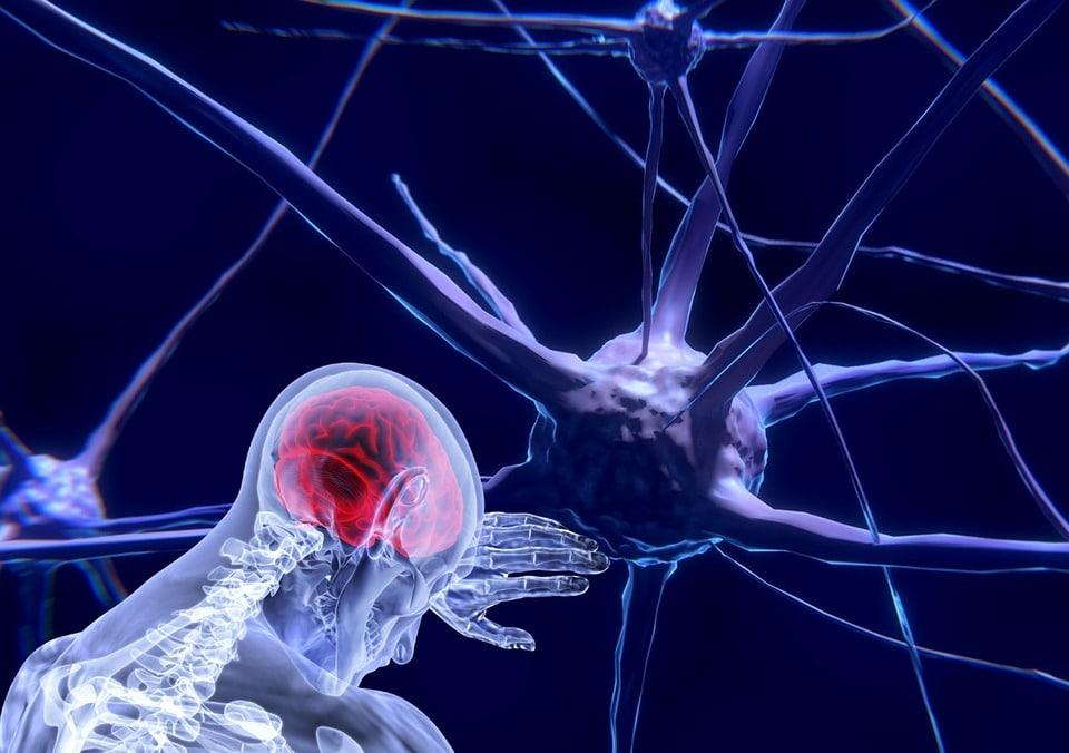Neurosciences Paris